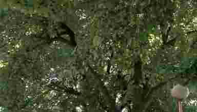krošnja drveta